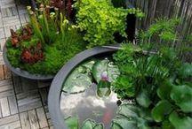 >zen garden<