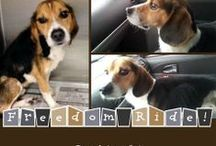 Freedom Rides! / These pins show animals that we have JUST rescued, on the way to a new life - what we term the FREEDOM RIDE!