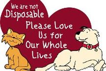 Humane Education / Things to know for responsible pet owning.