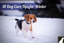 Dog Care Tips / everyday tips and tools to help look after your dog