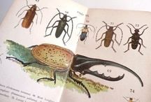 Vintage Natural Science Books Vintage Bird Guides Animal Guides  / Vintage Guides & Books on the Natural World around us from the Vintage Books Team on Etsy
