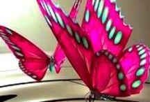Photography: Butterflies