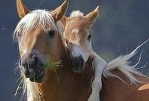 Photography: Horses