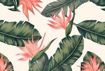 Pattern / Background