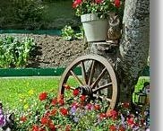 Garden & Yard / Growing Tips & Ideas for the garden, yard or anywhere you need to plant/grow something