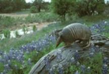 Texas Animals