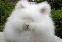All things fluffy