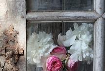 Jardins et Fleurs