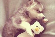 Animals! :) <3