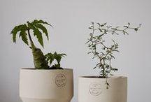 ✧ plant babies ✧ / ~