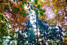 Trees / Bomen