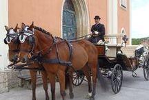 Pferdekutsche / Fiaker / Mit der Pferdekutsche zur Hochzeit. Für viele Frauen ein Traum, der am großen Tag wahr wird. Wir zeigen euch sämtliche Dienstleister im deutschsprachigen Raum.