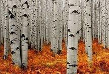 nature INSPIRATION / more inspiration for more design