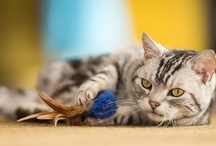 Activity & Play / by Purina ONE Cats