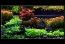 Aquarium / Terrarium at Home