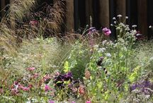 Meadow / Prairie garden inspiration and plant combinations