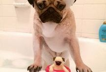 CUTE - Pets Having a Soak / When you can't go to the toilet alone without being watched by a furry friend - you know you're a dog owner! Does your pet simply love/hate baths times? These funny pets made us chuckle here at soak.com HQ! http://soak.com/