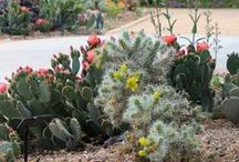 Gardens / Working on your green thumb? Look to our 180 acres of botanical Gardens for inspiration, and discover cool tips and tricks for desert gardening.  / by Springs Preserve