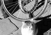 Bike Pretty Bike Kitty