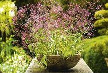 Flower Pots & Terrariums