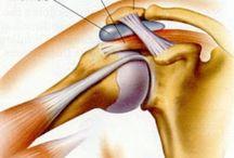 Relevant Anatomy Of Shoulder, Shoulder blade And Upper Limb / Images of the shoulder, shoulder blade, elbow, forearm, wrist and hand. Including some images of common upper limb issues including carpal tunnel and shoulder impingement.
