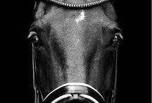 Equine Fanatic