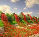 Topiary/ Topiaries