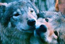 Wolves, wolves everywhere!
