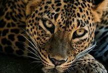 Faszinierende Tierfotografie