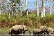 National Parks / Top wildlife parks in India you just can't miss.