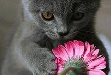 Feline / by M