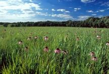 Schulenburg Prairie  / by Morton Arboretum
