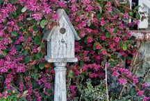 Birdhouses / by Sy Tyson