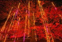 Illumination: Tree Lights at The Morton Arboretum / Join us this holiday season as The Morton Arboretum is transformed into an interactive wonderland of color and light during our winter lights event, Illumination: Tree Lights at The Morton Arboretum. From November 21, 2014 to January 3, 2015 Illumination offers a holiday experience far beyond traditional twinkle lights, engaging your senses with dazzling projections, trees that respond to your touch and voice, and vivid, electric colors throughout. Details at mortonarb.org/illumination  / by Morton Arboretum