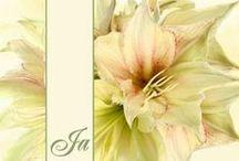 Trouwkaarten bloemen / Trouwkaarten met bloemen design. Kies een mooie trouwkaart, pas de tekst aan, voeg eventueel nog een of meerdere eigen foto's toe en je Trouwkaart is klaar. Bestel gerust een proefdruk per post (gratis en helemaal vrijblijvend), zodat je -voordat je de definitieve bestelling plaatst- kunt zien hoe de uitnodigingskaarten voor jullie huwelijk eruit komen te zien!