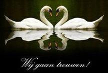 Romantische Trouwkaarten / Romantische trouwkaarten voor de mooiste dag van je leven! http://www.trouwpost.nl/trouwkaarten/romantisch/