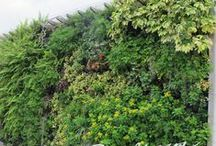 greenfingers plant wall