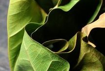 Greenfingers Foliage Arrangement