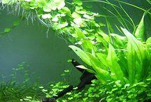 Aquarium/Terrarium