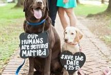 Wedding Party Animals / Ideas for including your pet at your wedding.