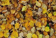 | Autumn Inspiration |