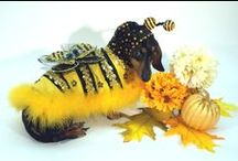 Cute Dog Costumes / Beautiful, whimsical, and just downright cute pet costumes! These are all custom made, and specializing in character, celebrity imitation, and holiday season costumes. All costumes are for sale.
