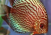 #Tropical Fish