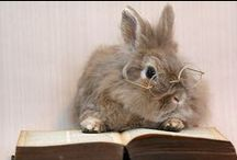 Too Cute / Animals love to read