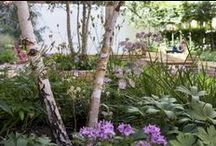 Garden Design by Clifton Nurseries / We design the most beautiful gardens, often were space is limited.