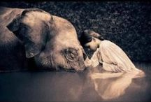 Gentle giants / Elephants are the best animals, so great yet so content, calm and a symbol of wisdom and prosperity
