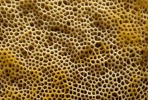 Trypophilia / The opposite of Trypophobia, the fear of holes. I enjoy looking at clusters of small images.