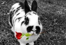 Bunnies of course! / by Mary Poag