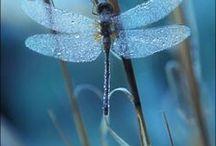 Dragonfly, butterfly, birds....