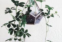 Interior | plants / Plants #indoor #plant #succulent #terrarium #cactus